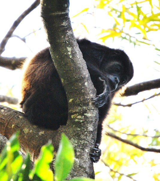Students have the ability to study and observe primate behavior patterns with MRC