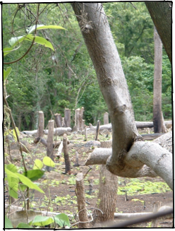 Deforestation destroys our vulnerable Mesoamerican forests